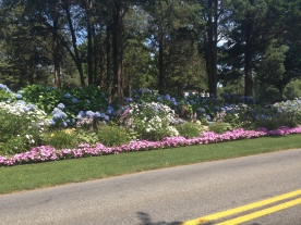 An abundant flower bed with lots of hydrangeas in Cape Cod