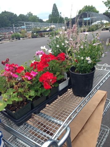 Geraniums, Heather and False Asters at Sun Nurseries, Woodbine, MD